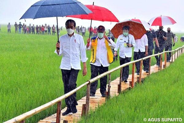 Presiden Jokowi meninjau lumbung pangan atau food estate di Desa Makata Keri, Kecamatan Katiku Tana, Kabupaten Sumba Tengah, Provinsi Nusa Tenggara Timur (NTT) pada Selasa (23/2/21).